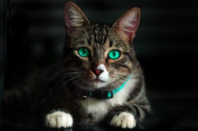 Jak zapewnić rozrywkę kotu?